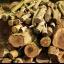 Deforestation and desertification