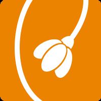 Plicatus_orange.jpg
